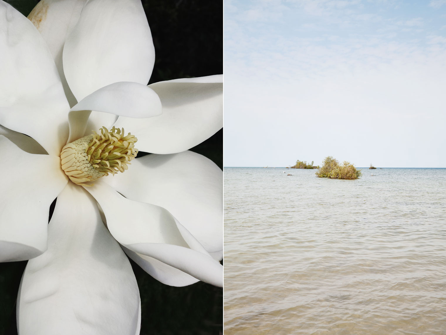peggy-wong-photography_172255_magnolia_0259_michigan