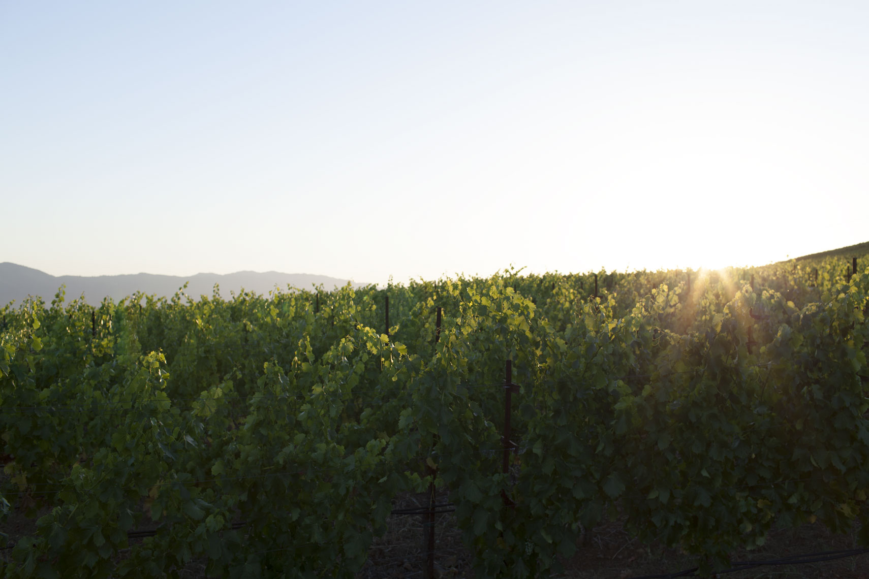 peggy-wong-photography_stories_nine-suns-winery_174